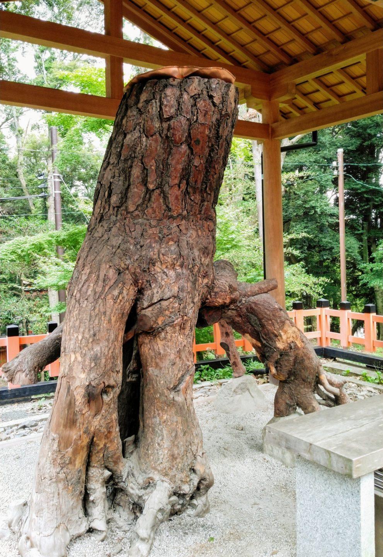 伏見稲荷の根上の松